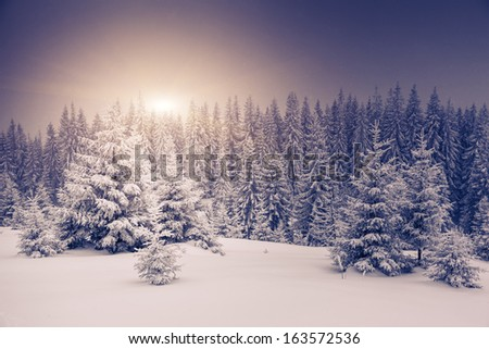 Fantastic winter landscape. National Park. Carpathian, Ukraine, Europe. Beauty world. - stock photo