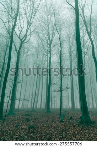 Fantasy Forest in the fog in Green.
