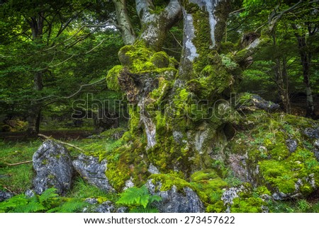 Fantasy forest with trees and stones covered with moss - stock photo