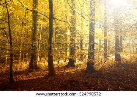 Fantasy golden sun light in the autumn forest landscape. Lovely red, orange and yellow color leaves on the forest floor. - stock photo