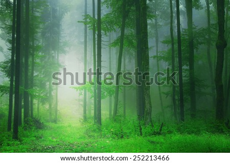 Fantasy green forest with mystic light. Color filter effect used.