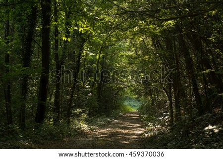 Fantasy landscape with a green tunnel of illuminated trees on a forest path leading to a  light.