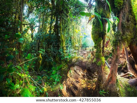 Fantasy mystical tropical mossy forest with amazing jungle plants and flowers. Nature landscape for mysterious background. Malaysia - stock photo