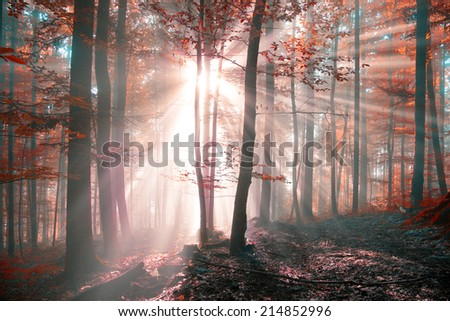 Fantasy seasonal autumn forest scene with sunbeams. - stock photo