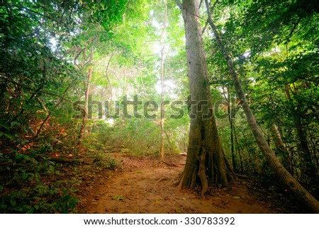 Fantasy tropical jungle forest landscape with road path way. Sun beams shining  through dense trees. Thailand nature - stock photo