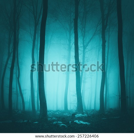Fantasy turquoise blue light color forest scene background. - stock photo