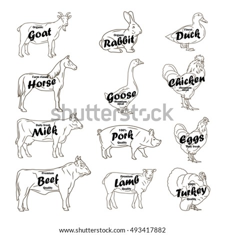 Stock Illustration Butcher Chart Vector Illustration Turkey Lamb Goat Chicken Cow Pork Cuts Diagramm Image61900991 further Cow moreover Whole Grain Diagram furthermore Lamb Body Parts Diagram furthermore Goat. on goat meat cuts diagram