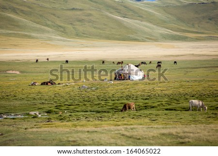 Farm animals pasturing near yurt, Kyrgyzstan - stock photo