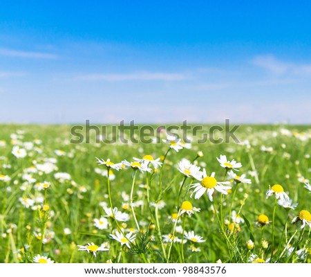 Farm Area On a Meadow Landscape Wallpaper - stock photo