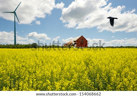 Farm. Canola field in bloom with a wind turbine in the distance, and a broken down barn, in the summer.  - stock photo