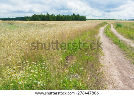 Farm dirt road in cereal rye field with cornflowers and wild chamomiles - stock photo