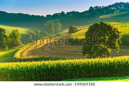 Farm fields and tree on a hillside in rural York County, Pennsylvania. - stock photo