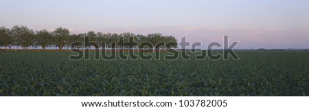 Farm Fields outside of San Antonio, Texas