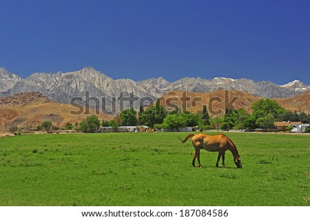 Farm Horse - stock photo