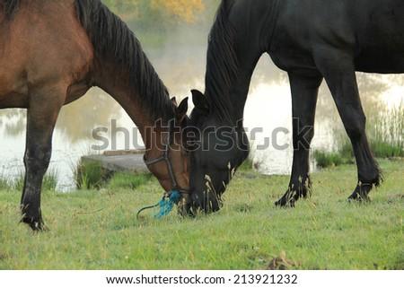 Farm horses - stock photo