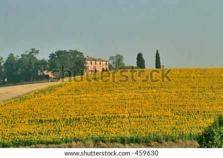 Farm house with field of sunflowers - stock photo