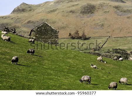farm in the middle of farmland and fields - the lake district national park, Cumbria, England, UK - stock photo
