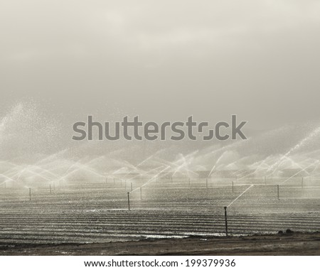 Farm land being irrigated in the morning/Farm Irrigation/Water spray on farm land in the early morning in Northern California - stock photo