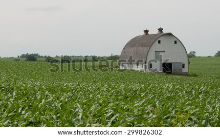 Farm scene: White barn surrounded by corn field - stock photo