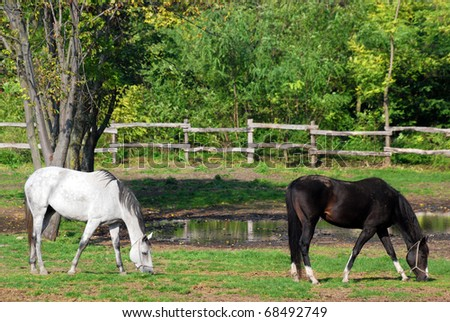 farm scene with white and black horse - stock photo