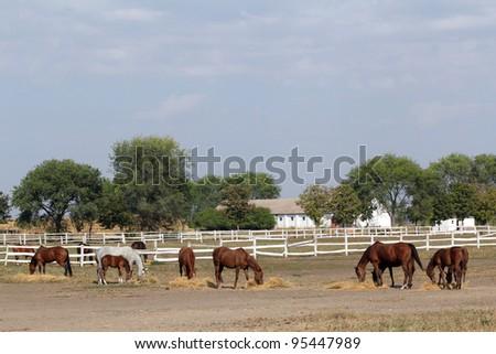 farm with horses - stock photo