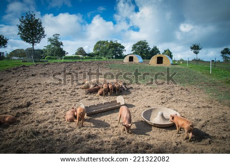 Farm with pig and sky in background - stock photo