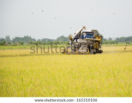 farm worker harvesting rice with tractor in Thailand - stock photo