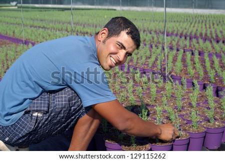 Farm worker preparing new plants - stock photo