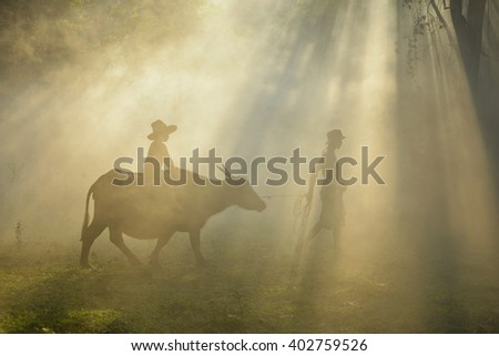 Farmer and buffalo on fog in during sunset