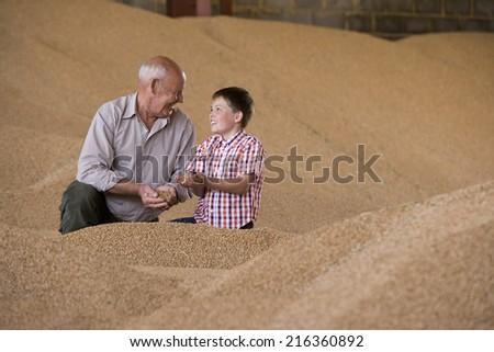 Farmer and grandson cupping wheat grains on grain heap - stock photo
