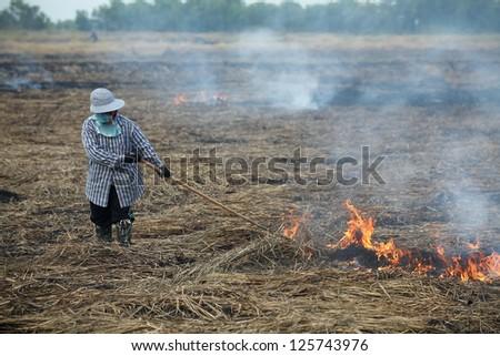 farmer burning straw in rice plantation. - stock photo