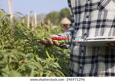 Farmer checking red chili paper with notepad on hand - stock photo