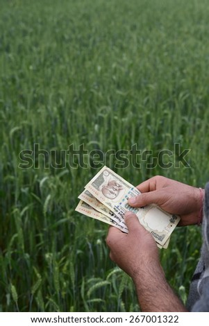 Farmer Counting Indian money in his lush green wheat farm