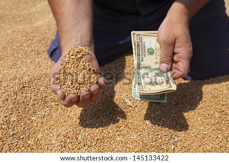 Farmer hand holding dollar banknote and wheat - stock photo