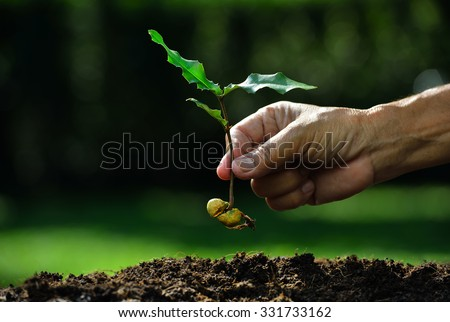 Farmer hand planting young plant with seed on the soil  - stock photo