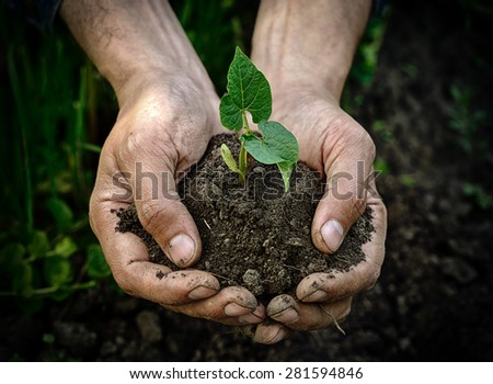 Farmer hands holding young plant with soil - stock photo
