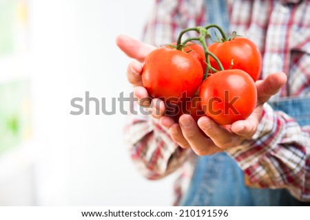 Farmer holding fresh organic tomatoes in hands cupped. - stock photo