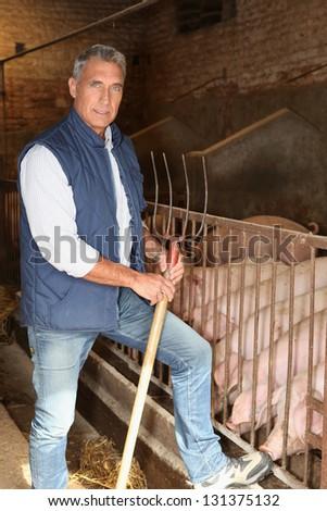 Farmer in a pig pen - stock photo