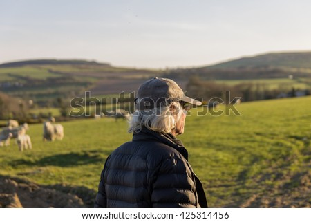 farmer in black puffer jacket and cap looking at sheep and lambs in fields at sunset. - stock photo