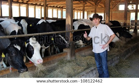 Farmer in cowboy hat giving a thumb up. Cowboy and Cows. Dairy farming. Cows in a farm cowshed. Dairy farmer in a modern stable. - stock photo
