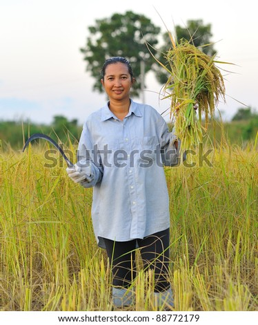 farmer in field, it's harvest time - stock photo