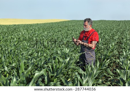 Farmer  inspect quality of corn using phone or tablet - stock photo