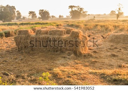 Farmer is a professional who works on agriculture, including the cultivation of plants in gardens and fields. Animal on land In water and in sea For food production natural fibers