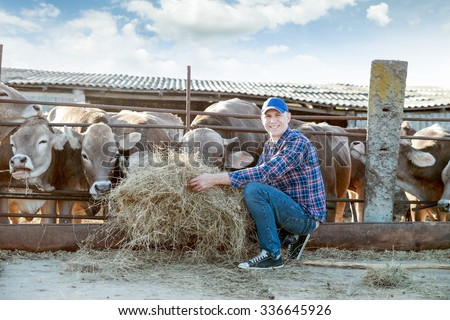 Farmer is working on the farm with dairy cows - stock photo