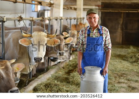Farmer is working on the organic farm with dairy cows and holding big milk container pot. Model is a real farm worker!  - stock photo