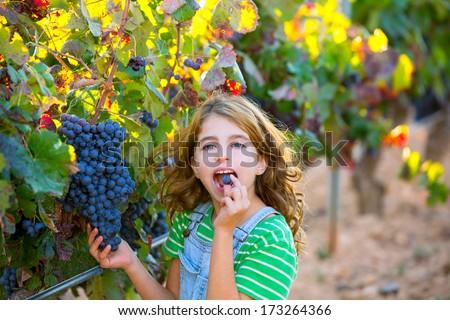 Farmer kid girl in vineyard eating grape autumn leaves in mediterranean field - stock photo