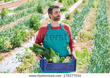 Farmer man harvesting vegetables in Mediterranean orchard field - stock photo