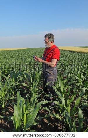 Farmer or agronomist inspect quality of corn using phone or tablet - stock photo