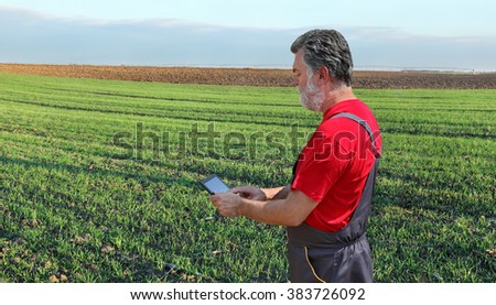 Farmer or agronomist inspect quality of wheat plant in field, using tablet - stock photo