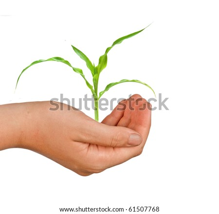 Farmer presenting corn shoot as a gift of agriculture - stock photo